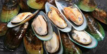 Fresh Shellfish, Buy Online, Fresh Fish, Seafood, UK